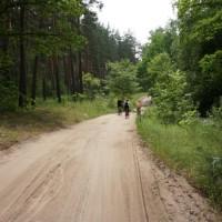 Воронежский лес